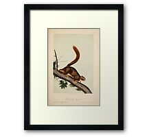 James Audubon - Quadrupeds of North America V2 1851-1854  Red Tailed Squirrel Framed Print