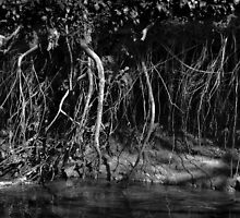Bit o' root, riverbank erosion ii - photograph by Paul Davenport