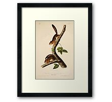 James Audubon - Quadrupeds of North America V1 1851-1854  Richardson's Columbian Squirrel Framed Print