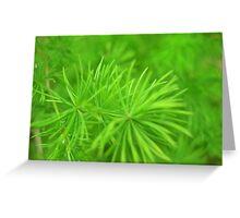 Asparagus Fern Greeting Card