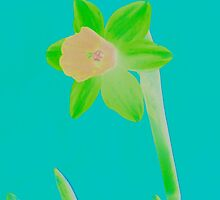 Daffodil Light Green by Mike Solomonson