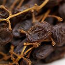 Dried Muscatels by tarynb