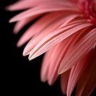 Pink Passion by Kate Baumgartner