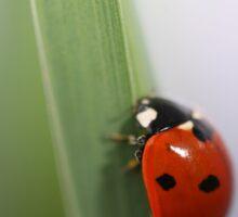 T-shirt: Ladybug070 - nancypics Sticker