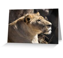 NO PLAY... CAUTION! - The Lioness  Panthera LEO Greeting Card