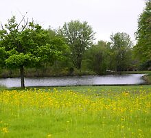 WILD MUSTARD AT THE POND by Pauline Evans