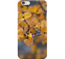 Turning of the Fagus  iPhone Case/Skin