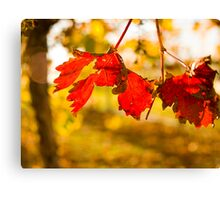 Autumn in the Vineyard Canvas Print