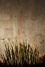 grassland by Anthony Mancuso