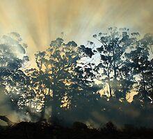 Montagu Bushfire , nor west coast Tasmania , Australia by phillip wise