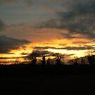 evening setting by Finbarr Reilly