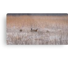 Snow On The Booming Grounds Metal Print