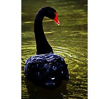 Swan River Photographic Print