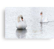 Courting the lady - Mute Swan couple Canvas Print