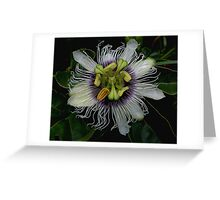 Passion Fruit Greeting Card