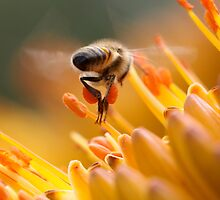 Bee At Work by jdkvirus