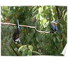 Tui......Stop showing off........! Poster
