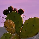 Cactus Fruits by Ingrid Dance