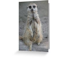 The Lookout ... Posing! Greeting Card