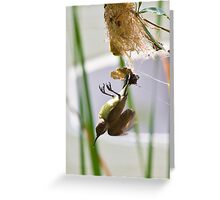 Little Spiderhunter 2 Greeting Card