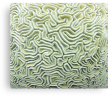 Pic Your Brain Coral (Natural) Canvas Print