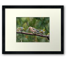 They all moved over and one fell off............! Framed Print
