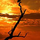 Vulture at Sunset, Kruger National Park,  South Africa. by photosecosse /barbara jones