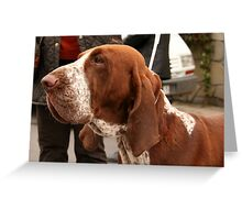 Cute Bracco Italiano