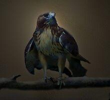 Hawkeye by Judi Taylor