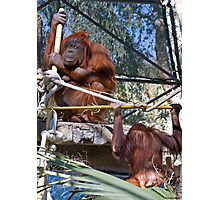 Primate Workout Photographic Print