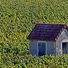 Vineyard Hut by phil decocco
