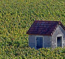 Vineyard Hut by phil decocco