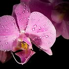 Beautifull orchid by CerbeR2008