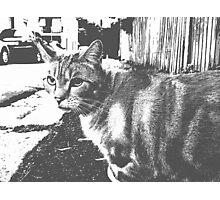 Feline Notes Photographic Print
