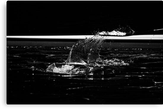 Splash by Matt Sillence