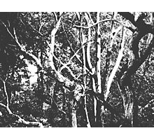 Arboreal Notes Photographic Print