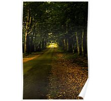 Shady Wooded Passage in Brittany France Poster