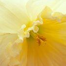 Saffron Fragrance by sundawg7