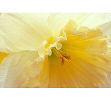 Saffron Fragrance Photographic Print