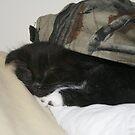 Lilly Sleeping Under a Baseball Hat by Fern Design