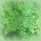 Misty Ferns by Elaine Bawden