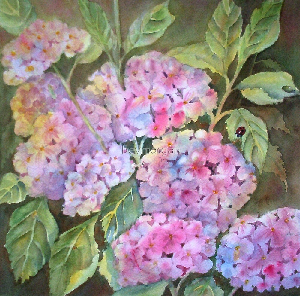 Pink Hydrangeas with Visitor by bevmorgan