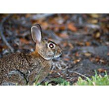 Wild-eyed Bunny Photographic Print