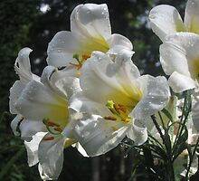 Regale Lilies Refreshed by Pat Yager