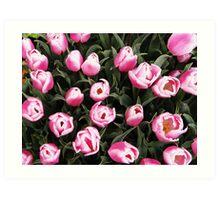 Tulip Group Overhead shot Art Print