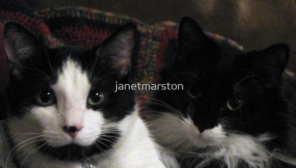 My sweet babies - the twins - Momo and Cheyenne by janetmarston