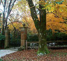 Mt Wilson, Yengo Sculpture Gardens NSW Australia by heidiypi1