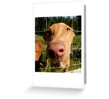 Unbelievable Pharaoh Hound