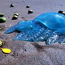 Blubber of the Sea by Garry Schlatter