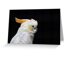 Beautiful specimen of parrot Greeting Card